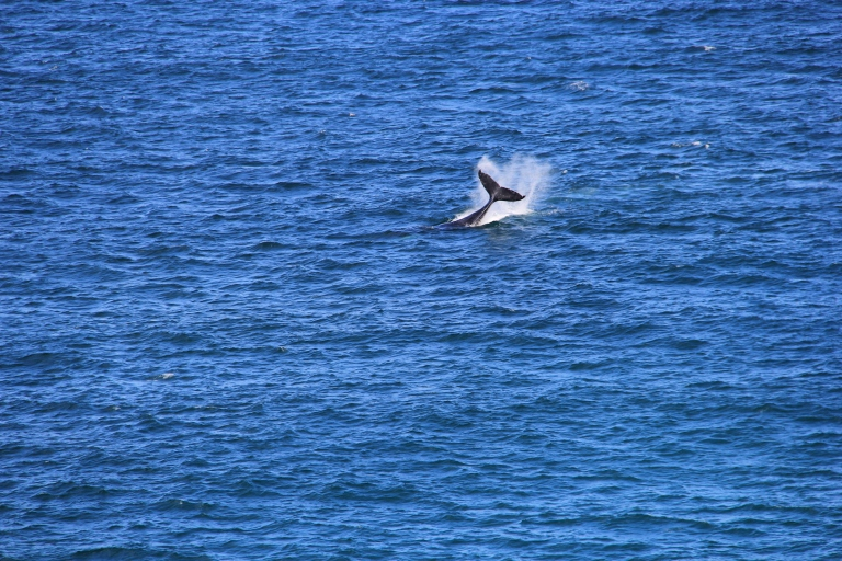 Whale-spotting from Byron Bay Lighthouse